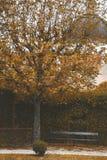 Park z drzewami, ostrzyżonymi krzakami i ławką, Żółty jesień krajobraz fotografia stock