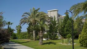 Park z drzewkami palmowymi na tle niebieskie niebo w odległości, jest mężczyzna zdjęcie wideo
