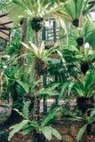 Park z obliczającymi drzewami w Nong Nooch tropikalnym ogródzie botanicznym blisko Pattaya miasta w Tajlandia zdjęcie royalty free
