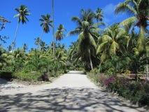 Park z palmami zdjęcie stock