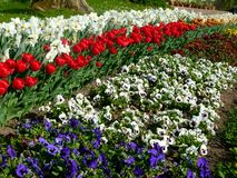 Park z wielkim flowerbed obraz royalty free