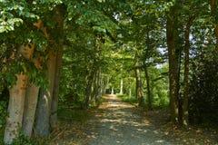 Park z zielonymi drzewami zdjęcia royalty free