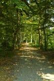 Park z zielonymi drzewami obrazy stock