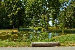 Park z zielonymi drzewami obraz royalty free