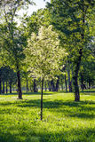 Park - Zagreb Stock Photo