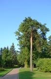 Park in Zelenogorsk. Stock Image