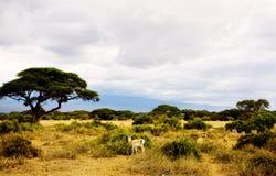 park zwierzęcych Obrazy Royalty Free