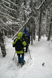 Parka di Yelllow, viandanti dello snowshoe Fotografie Stock Libere da Diritti