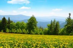 Parka Narodowego Bawarski las, Niemcy Obraz Royalty Free