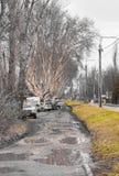Parkautos unter alten Bäumen lizenzfreie stockfotos