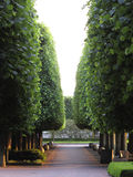 Parkbahn im botanischen Garten. Lizenzfreies Stockfoto