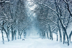 Parkbank en bomen die door zware sneeuw wordt behandeld Stock Foto