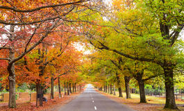 Parkbank im Herbst Stockbilder