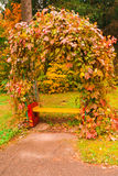 Parkbank mit Efeu im Herbst Stockfoto