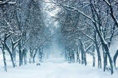 Parkbank und -bäume bedeckt durch starke Schneefälle Stockfoto