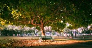 Parkbank unter Baum Lizenzfreie Stockbilder