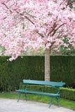 Parkbank unter einem blühenden Kirschbaum lizenzfreies stockfoto