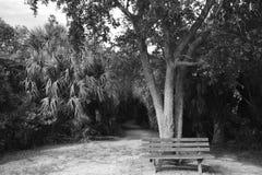 Parkbank unter einem Schattenbaum Stockbild