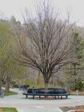 Parkbanken en wegen in het Park van het Geheugenbosje in Salt Lake City Utah langs Wasatch Front Rocky Mountains in de vroege len royalty-vrije stock foto's