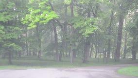 Parkbaumauto des dichten Nebels stock video