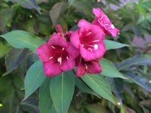 Parkbloemen Stock Foto's