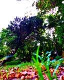 Parkboom Royalty-vrije Stock Afbeeldingen
