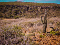 Parke Nacional Arikok Аруба Стоковые Фото
