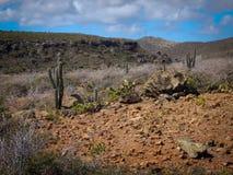 Parke Nacional Arikok Aruba Royaltyfri Foto