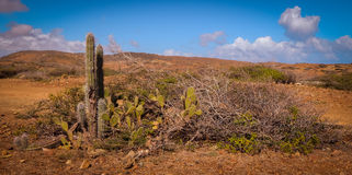 Parke Nacional Arikok Aruba Royaltyfri Fotografi