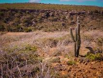 Parke Nacional Arikok Aruba Fotos de Stock