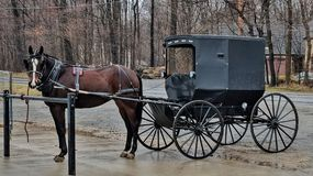 Parked Amish horse and buggy. A hitched workhorse waits its occupants of a rainy day Royalty Free Stock Image