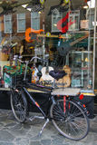 Parked bicycle in front of shop window with guitars Stock Image