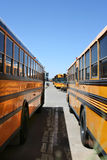 Parked school buses. Looking between two school buses toward a line of buses royalty free stock image