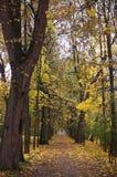 parken för 2 automn går Royaltyfri Foto