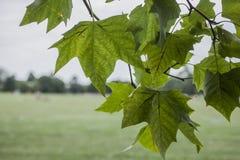 Parken in Londen, Engeland; bladeren en weiden stock foto