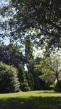 Parken Sie Bäume Stockbild
