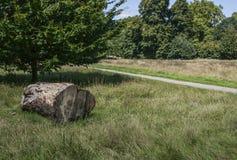 Parken Sie an einem sonnigen Tag und an einem Baumstamm Stockfotografie