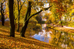 Parken Sie im Fall und im Teich in der Mitte von Riga Stockfotografie