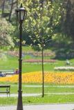 Parken Sie mit Blumen am Badekurort Vrnjacka Banja Stockbilder