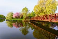 Parken Sie mit roter Brücke und rosa Blütenbaum Stockfotografie
