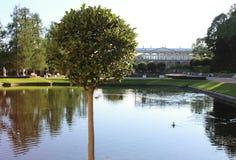 Parken sonniger Schwansee des Sommers mit Reflexionen und grüner runder Baum in der Catherine, Pushkin, St Petersburg Stockbilder