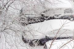 Parkendes Auto durch die Baumniederlassungen während der Schneefälle Stockbild
