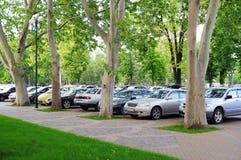 Parkenplatz unter flachen Bäumen. lizenzfreie stockbilder