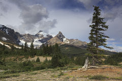 Parker Ridge in Canadian Rockies Stock Image