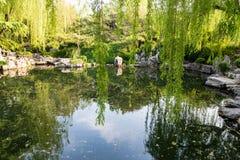 Parkera av Baotu Quan i Jinan, Kina Arkivfoton