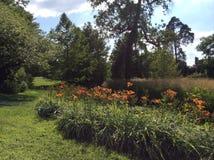 Parkera av Fontainebleau, blommor, Frankrike Royaltyfria Bilder