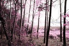 Parkera av Pateira de Fermentelos Royaltyfria Foton