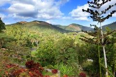 Parkera av Soroa (Jardin Botanico Orquideario Soroa) i en solig dag, Kuba Arkivfoton