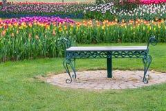 Parkera bänken i Tulip Flower Garden royaltyfri bild