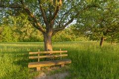 Parkera bänken under äppleträd Arkivbilder